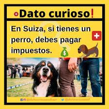 Perros en Suiza