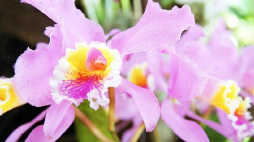 Orquídeas y bromelias