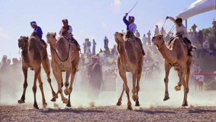 Carrera de camellos en Dubái