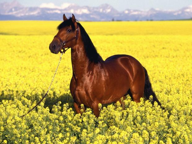 Razas de caballos