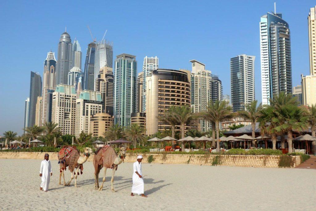 Camellos en Dubái
